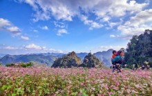 Lễ hội Hoa tam giác mạch sẵn sàng chào đón du khách