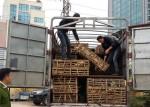 Bắt giữ 3 tấn mèo Trung Quốc nhập lậu