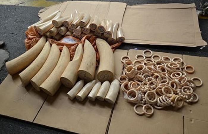 Chuyển 200kg ngà voi từ Angola về Việt Nam bằng máy bay