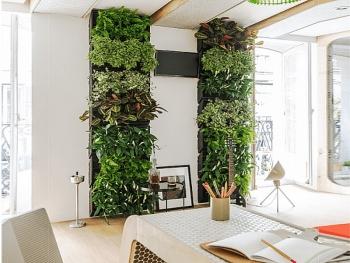 Ấn tượng với tường thực vật trong nhà