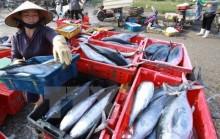 Hải sản miền Trung: Loại nào ăn được, loại nào chưa ăn được?