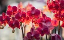 Những loài hoa mang lại tiền tài cho gia chủ ngày Tết