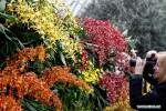 Muôn sắc phong lan hội tụ trên đất Mỹ