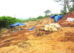 Cơn lốc vàng rừng Bồng Miêu