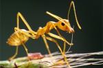 Thế giới côn trùng qua lăng kính macro: Loài kiến