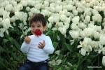 mua tulip o tho nhi ky