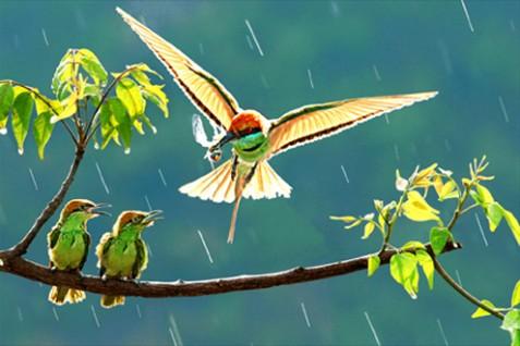 Chim đẹp 1