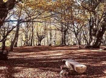 Tận hưởng vẻ đẹp mê hoặc của phong cảnh rừng núi nước Ý