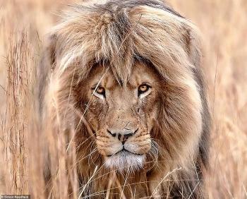 Loài động vật hoang dã dưới ống kính của nhiếp ảnh gia