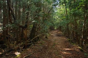 """Khu rừng Tự sát rùng rợn và bí hiểm – Nơi """"tiễn chân"""" con người sang thế giới bên kia"""
