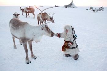 Cuộc sống truyền thống ở Bắc Cực Siberia qua ống kính của nhiếp ảnh gia