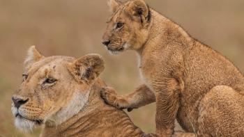Kenya – điểm du lịch số 1 của Đông Phi
