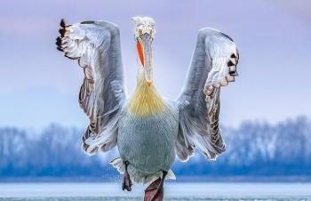 Đã tìm ra người chiến thắng trong cuộc thi nhiếp ảnh gia về đề tài chim năm 2019 trên thế giới