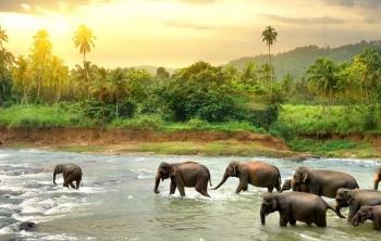Điều bất ngờ đằng sau ý tưởng chế biến giấy từ chất thải của voi