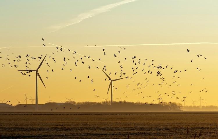 Giải pháp hữu hiệu để tuabin gió không làm hại động vật hoang dã