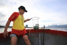 Sứa dày đặc biển gây ngứa cho du khách