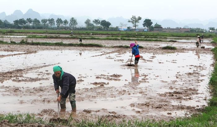 Trên 74% diện tích gieo cấy đã có nước đổ ải
