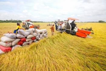 Vốn ngân hàng sẵn sàng cho sản xuất, chế biến, tiêu thụ sản phẩm lúa gạo