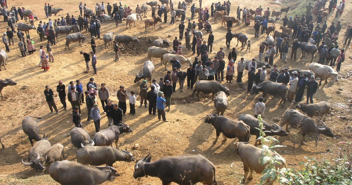 Đầu năm Tân Sửu đi chợ trâu lớn nhất vùng biên viễn Tây Bắc