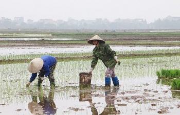 Các địa phương đã cơ bản hoàn thành lấy nước đổ ải vụ Đông Xuân 2020 - 2021