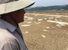 40 kg muối Sa Huỳnh bằng dĩa cơm bụi, diêm dân bỏ hoang đồng muối