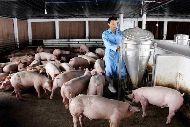 Vì sao thịt lợn rớt giá kỷ lục? - 1