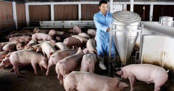 """Vì sao thịt lợn """"rớt giá"""" kỷ lục?"""