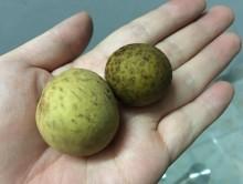 Lưu huỳnh tẩy trắng hoa quả: Điều gì đáng sợ nhất?
