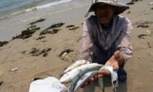 Tăng trưởng kinh tế chậm lại vì cá chết ở Formosa