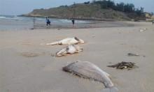Ai được bồi thường thiệt hại do sự cố môi trường biển?