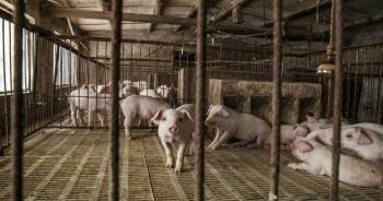 Kho dự trữ thịt lợn bí mật của Trung Quốc sắp cạn kiệt?