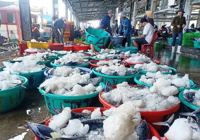 Khánh Hòa: Người làm nghề đánh bắt cá ngừ sọc dưa trúng lớn, lãi đậm - 2