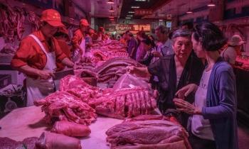 Trung Quốc quay cuồng vì dịch tả lợn châu Phi