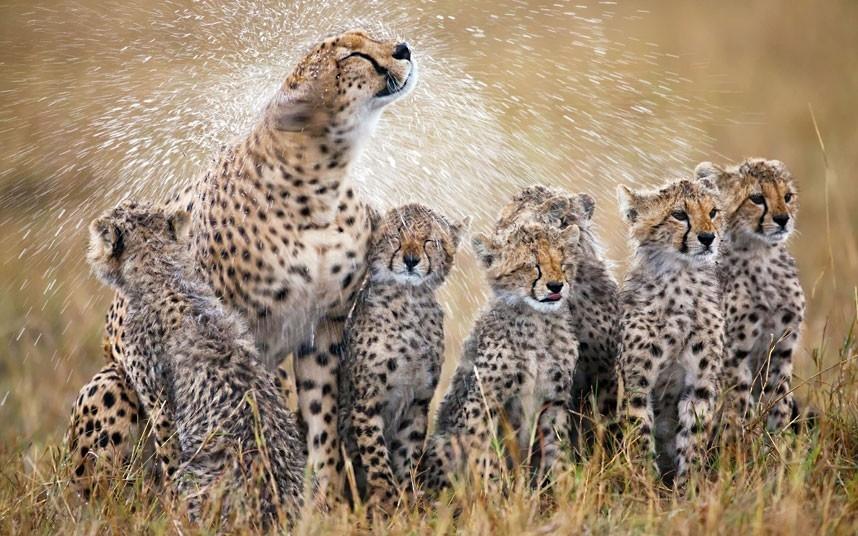 Cùng Ngắm Những Bức Ảnh Tuyệt Đẹp Về Các Loài Động Vật Trong Năm 2012