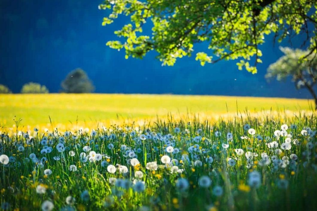 """Đẹp hút hồn những cánh đồng hoa dại, khiến bạn """"đến chẳng muốn về"""""""