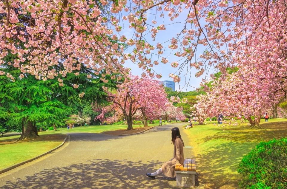 Ghé thăm những điểm đến nghệ thuật của Tokyo