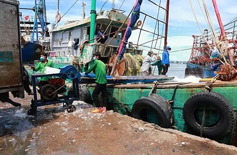 La Gi (Bình Thuận): Cho phép tàu thuyền gắn thiết bị giám sát hành trình đi khai thác thủy sản trên biển