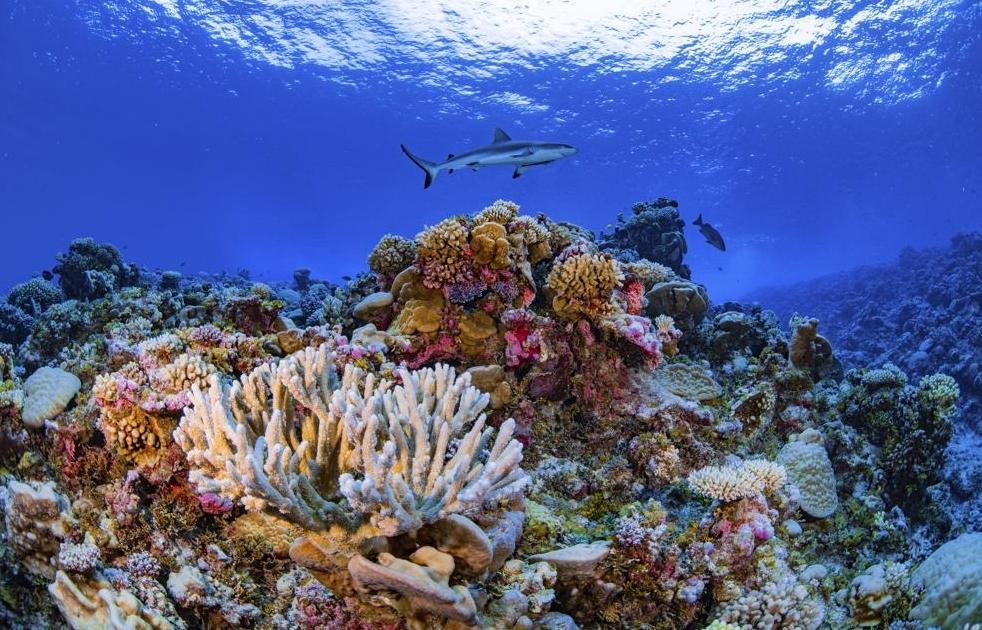 Hoàn thành bản đồ chi tiết đầu tiên về san hô toàn cầu