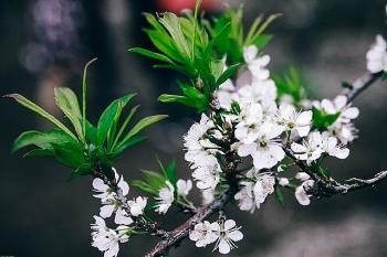 dung quen len tay bac mua xuan hoa dang goi