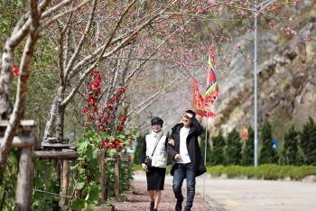 Ngắm thiên đường hoa đào Fansipan mùa đẹp nhất năm