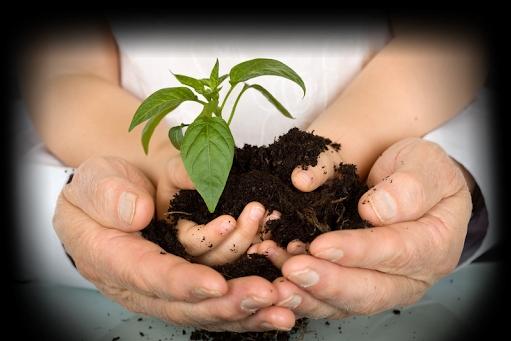 Cội rễ của sự trưởng thành