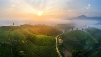 Vẻ đẹp mộng mơ của đồi chè Long Cốc - Phú Thọ
