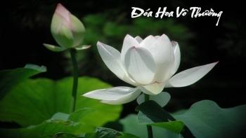 doa hoa vo thuong