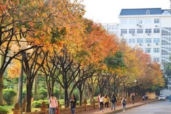 Sốt xình xịch con đường lá vàng đẹp tựa phim, vạn góc sống ảo ngay ngoại thành Hà Nội