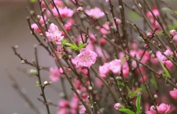 Tết Tân Sửu là một chuỗi ngày đẹp trời trên cả nước