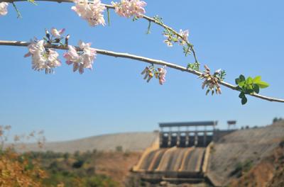 Thủy điện Ialy mùa xuân về!