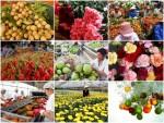 Tìm thị trường cho rau quả Việt