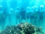 [Chùm ảnh] Đi bộ dưới biển ở Hòn Tằm, Nha Trang