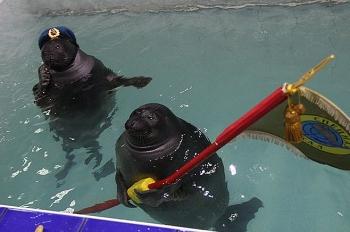 Hải cẩu Nga cũng chào mừng Ngày Chiến thắng