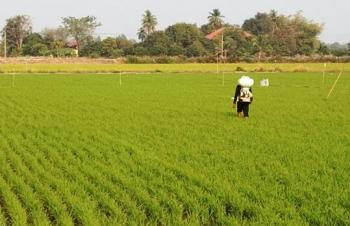 Thị trường phân bón Thái Lan tăng trưởng kép trong giai đoạn 2021-2026